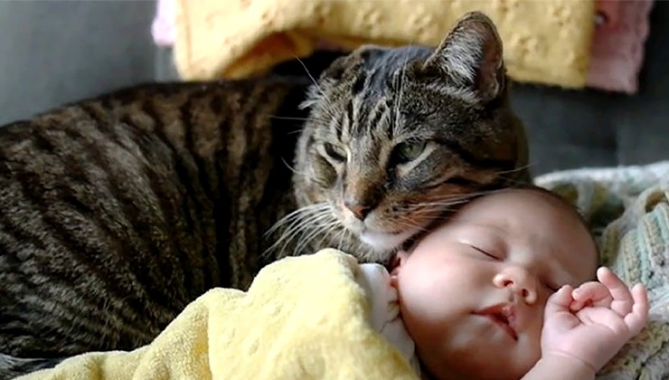 A baby napping with a tabby cat