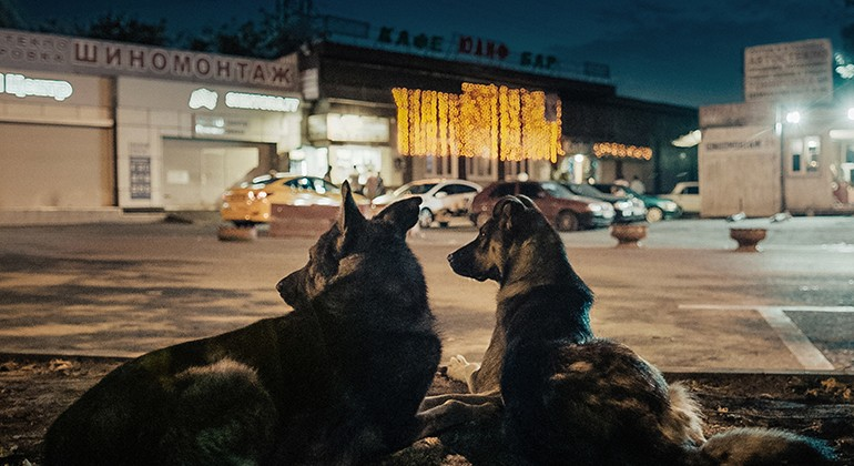 Two dogs laying in a busy street in Russia at night.
