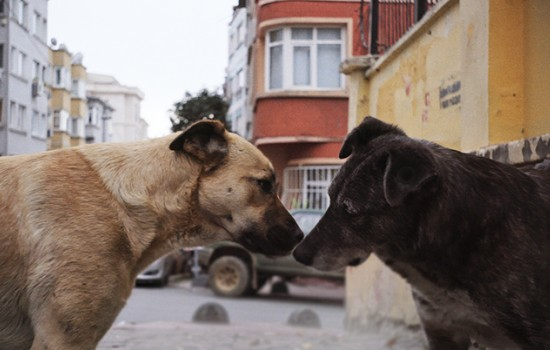 Two dogs, standing snout to snout on a city street.