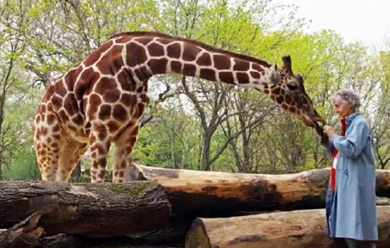 The Woman who Loves Giraffes with a giraffe