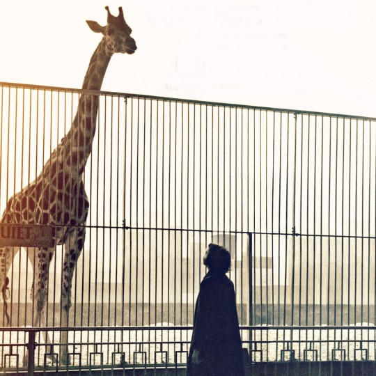 A woman and a giraffe