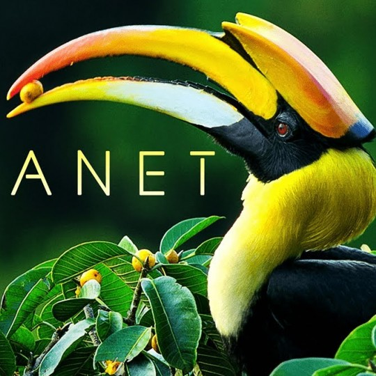 Our Planet title card with a large beaked bird